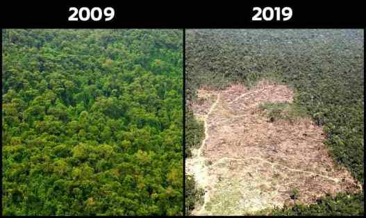 10YearChallenge-Forest