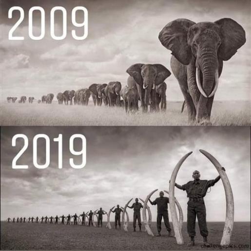 ten year challenge elephant